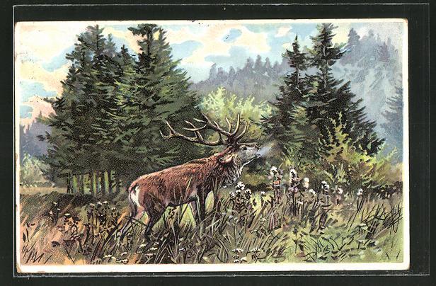 AK Schreiender Hirsch am Waldesrand