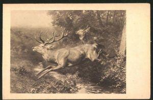AK Hirsch springt über einen Fluss