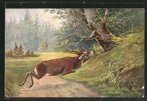 Künstler-AK Hirsch springt über einen Waldweg