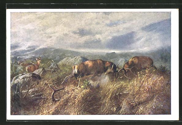 Künstler-AK Zwei Hirschbullen schlagen ihre Geweihe aneinander