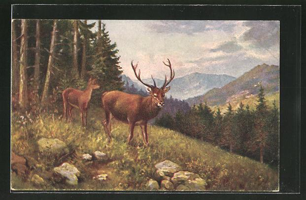 AK Hirsch und Hirschkuh auf einer Lichtung im Bergwald