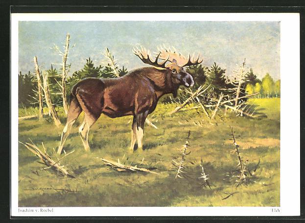 Künstler-AK Elch auf der Weide von J. v. Roebel