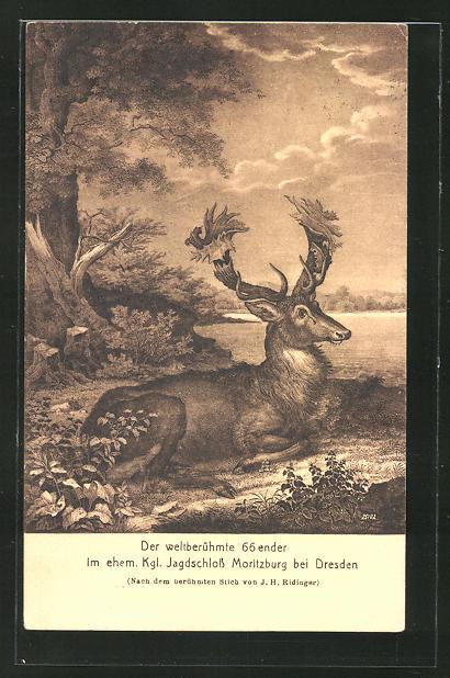 AK Hirsch am Waldesrand, der berühmte 66ender