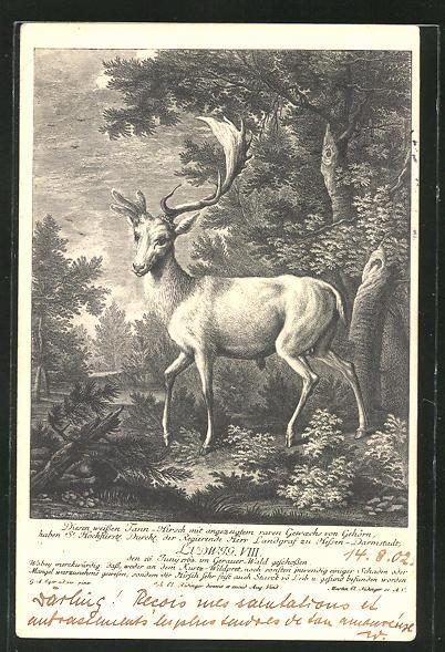 Lithographie Hirsch mit halbem Geweih am Waldesrand