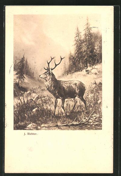AK Hirsch auf einer Lichtung