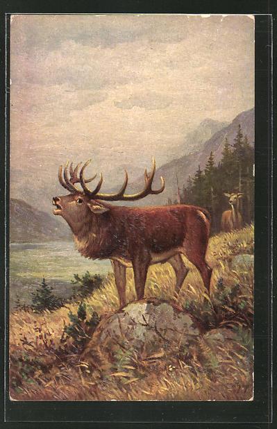 AK röhrender Hirsch auf einer Lichtung