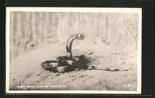 AK Schlange in agressiver Haltung