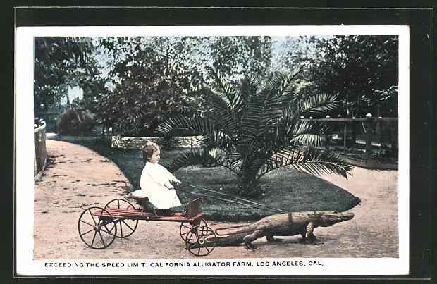 AK Los Angeles, California Alligator Farm, Kind mit Krokodil-Gespann