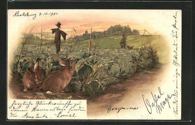 AK Kaninchen verstecken sich vor einem Jäger im Salatfeld