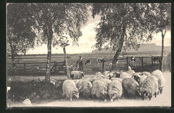 AK Aus der Heide, Schafe mit Hirte