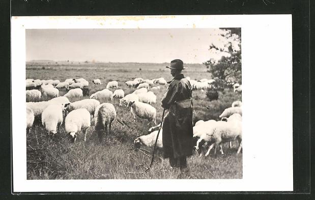 AK Hirte bei seiner Schafherde