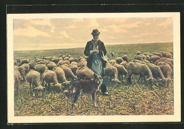 AK Heimkehrende Schafherde