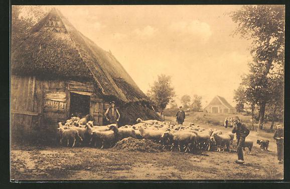 AK Schafe am Stall