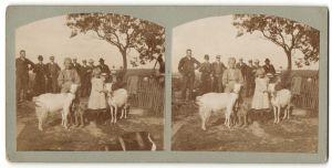 Stereo-Fotografie Mädchen mit Ziegen und Hund, Männer stehen im Hintergrund