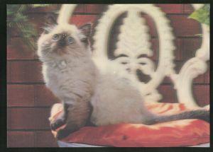 3D-AK Siamkatze auf einem Stuhl