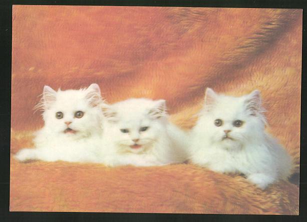 3D-AK Drei weisse Kätzchen