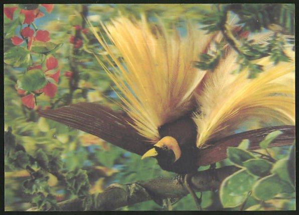 3D-AK Oiseau des Iles, Paradiesvogel