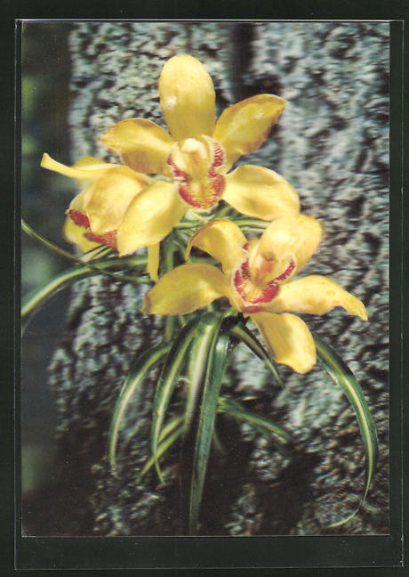 3D-AK Gelbe Orchideen an einem Baumstamm