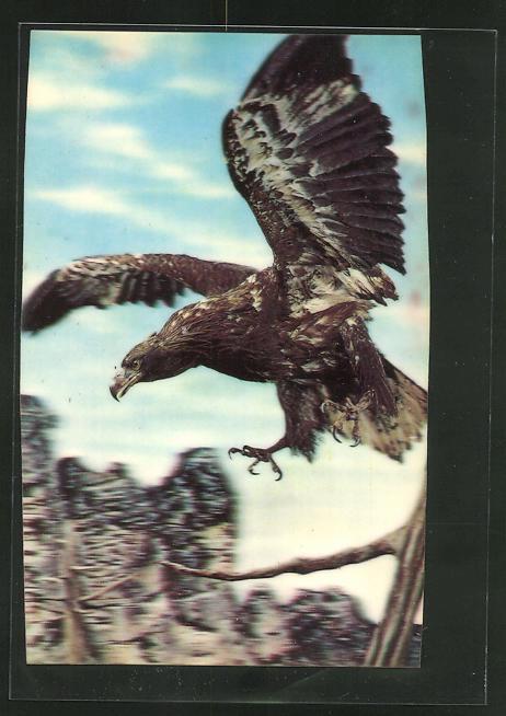3D-AK Adler nimmt seine Beute ins Visier