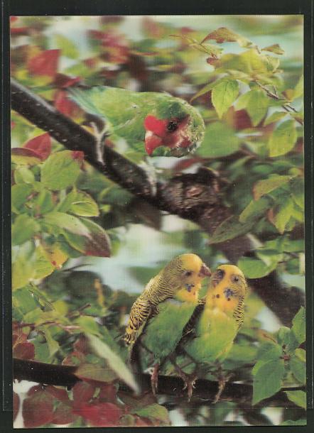 3D-AK Grüner Papagei mit rotem Schnabel und Wellensittich-Paar auf einem Ast