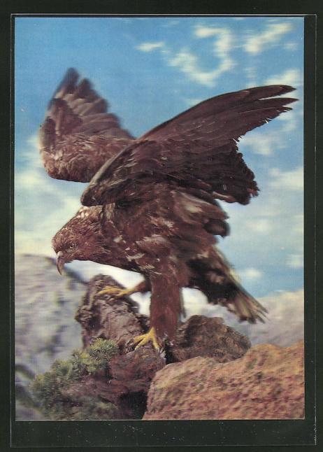 3D-AK Adler auf der Suche nach Beute