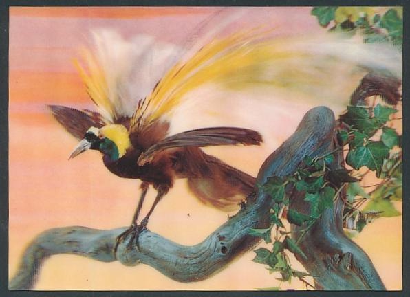 3D-AK Paradiesvogel auf einem Baum sitzend