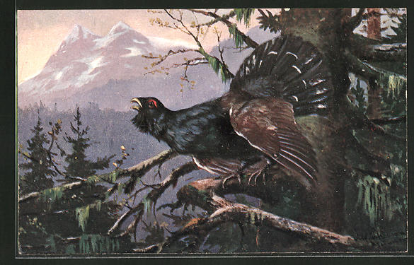 Künstler-AK Alfred Schönian: Auerhahn auf einem Baum