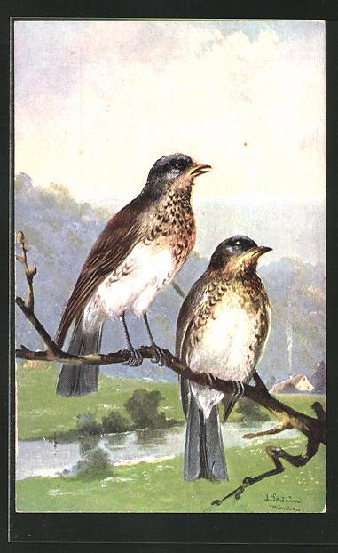 Künstler-AK Alfred Schönian: Vogelpaar auf einem Baumast