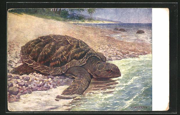 Künstler-AK Wasserschildkröte auf dem Weg ins Meer