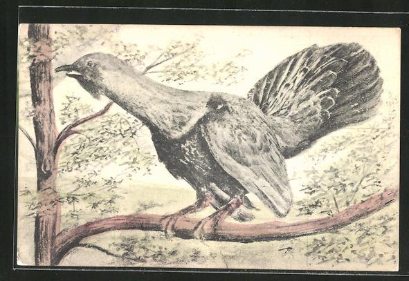 AK Auerhahnähnlicher Vogel auf einem Ast