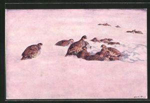 Künstler-AK III. Koroptve ve snehu, Vögel liegen im Schnee