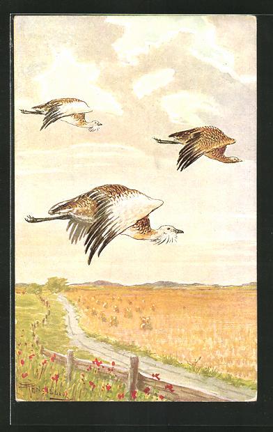 Künstler-AK Rebhühner im Flug über die goldenen Felder