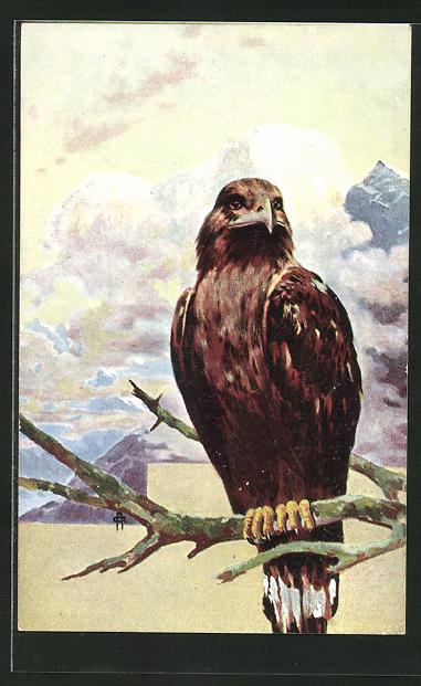 AK Adler hält Ausschau nach Beute
