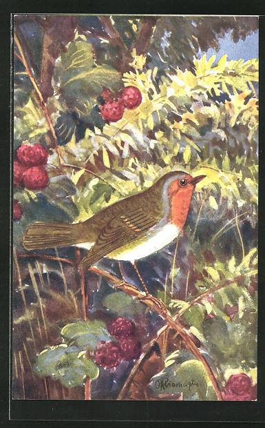 Künstler-AK Rotkehlchen auf einem Zweig mit Beeren