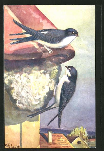 AK Schwalben an ihrem Nest