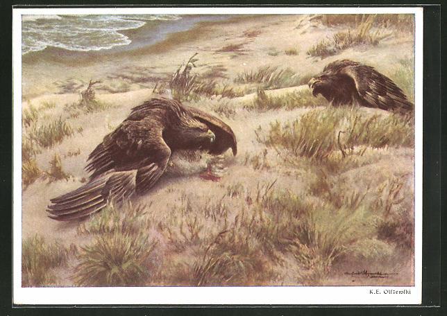 Künstler-AK Streitende Adler am See