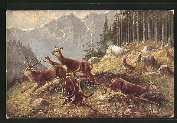 Künstler-AK M. Müller jun.: fliehende Hirsche und Hirschkühe