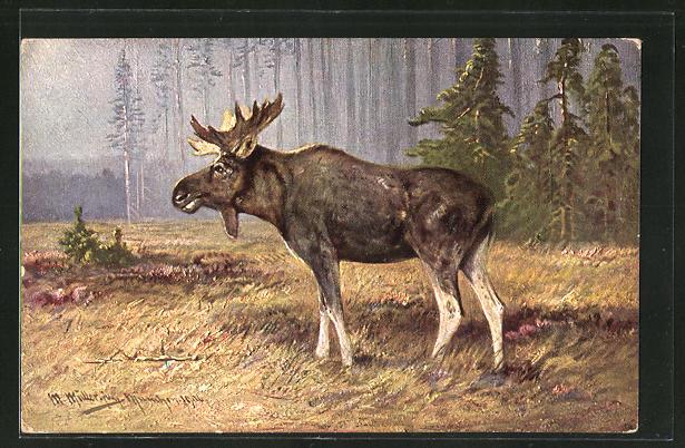 Künstler-AK M. Müller jun.: ein Elch auf einer Waldlichtung