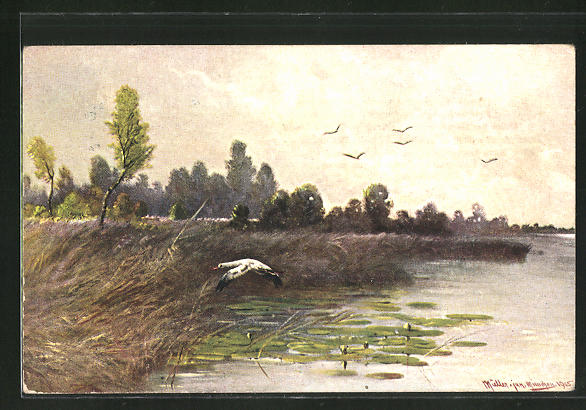 Künstler-AK M. Müller jun.: Vögel beim Überflug eines Sees