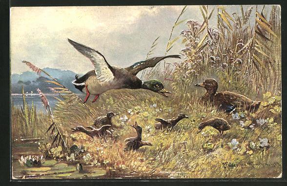 Künstler-AK M. Müller jun.: Entenfamilie am Ufer eines Sees
