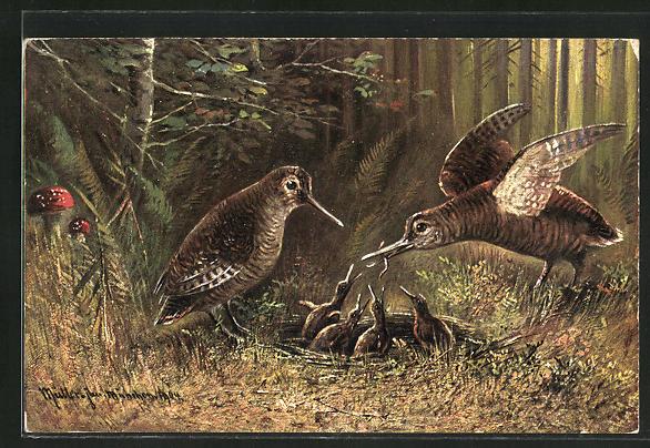 Künstler-AK M. Müller jun.: Vogelpaar beim Füttern des Nachwuchses