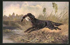 Künstler-AK M. Müller jun.: Jagdhund mit Ente im Maul