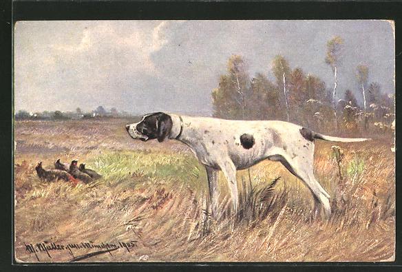 Künstler-AK M. Müller jun.: Jagdhund auf Fasanen schauend