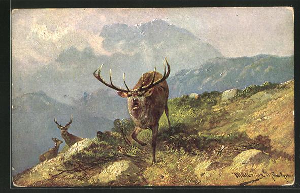 Künstler-AK M. Müller jun.: röhrender Hirsch auf dem Berg
