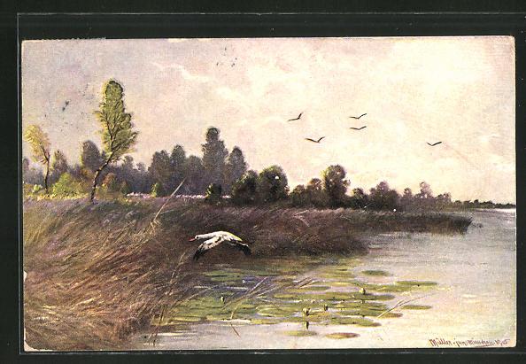 Künstler-AK M. Müller jun.: Fliegende Vögel über Wasser