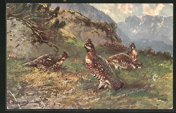 Künstler-AK M. Müller jun.: Vögel auf einer Wiese