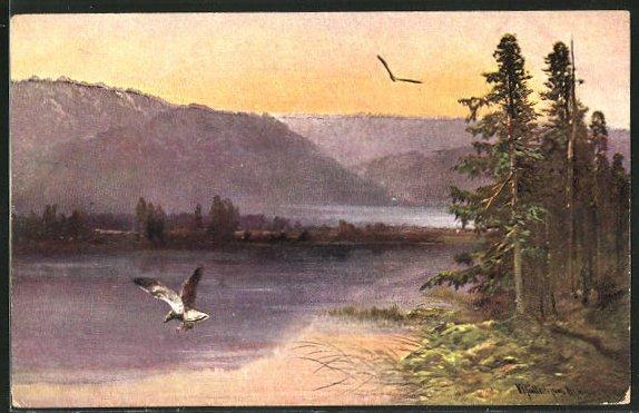 Künstler-AK M. Müller jun.: fliegende Raubvögel über Wasser