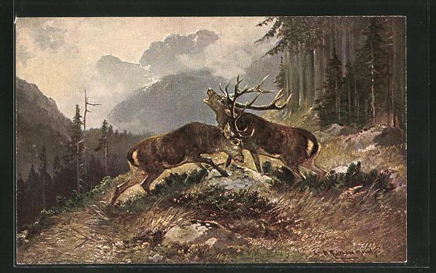 Künstler-AK M. Müller jun.: zwei kämpfende Hirsche