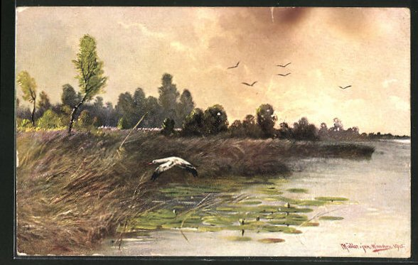 Künstler-AK M. Müller jun.: fliegende Vögel über dem Wasser