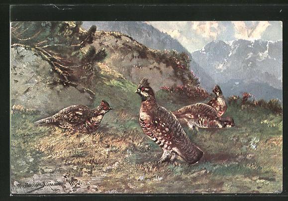 Künstler-AK M. Müller jun.: grasendes Federwild in den Bergen